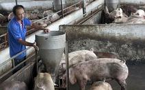 Chăn nuôi heo an toàn hơn sẽ bán được giá hơn