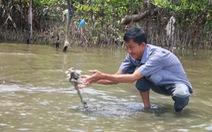 Audio 11-5:Hải sản chết ở Kiên Giang lan rộng