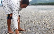 Phải báo cáo nguyên nhân cá chết ở Kiên Giang trước 14-5