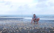 Hải sản chết ở Kiên Giang lan rộng
