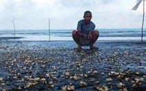 Phát hiện hóa chất công nghiệp ở chỗ cá, nghêu chết
