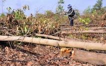 Yêu cầu xử lý hình sự vụ đốn hạ 10ha rừng tràm