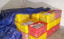 Bị cấm, doanh nghiệp hải sản vẫn lén sản xuất, xả thải