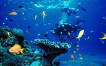 Cấp thiết bảo vệ hệ sinh thái biển Rạn Trào