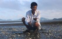 Cá, nghêu chết ở Hà Tiên: Có hóa chất trong nước biển