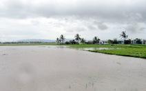 Nhiều nơi đạt đỉnh lũ, Ninh Thuận ra công điện ứng phó