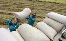 Nông dân ĐBSCL đã bán hết luá, giá tăng