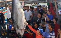 Câu được cá ngừ vây xanh 240kg tại Trường Sa