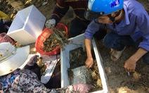 Tranh cãi quanh vụ tôm hùm chết hàng loạt ở Phú Yên