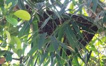 Tổ ong 10 lít mật tấn công 14 người nhập viện
