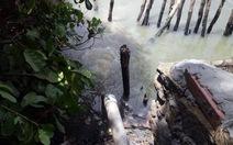 Công ty lắp ống dài 300m để xả trộm nước thải ra rạch