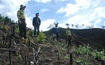 11ha rừng Đắk Nông bị doanh nghiệp chặt trụi
