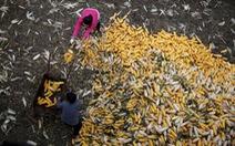 Người Trung Quốc bỏ phố về quê làm nông nghiệp sạch