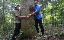 Đời người - đời cây