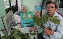 Người mê mẩn cây thuốc nam