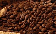 Phạt 400 triệu, công ty cà phê xả thải vượt quy định