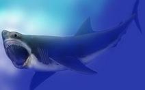 Vì saoloài cá mập lớn nhất thế giới biến mất không tung tích?