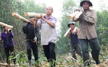 'Vua rừng' xứ Quảng