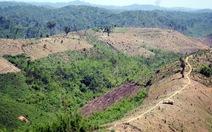 Cách chức nhiều lãnh đạo, cán bộ kiểm lâm để mất rừng