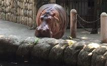 'Quán quân' sống thọ nhất loài ăn cỏ qua đời