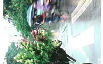 Hoa sen và phố cổ