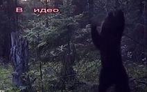 Clip ngộ nghĩnh gấu 'nhảy múa' trong rừng