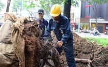 Di dời 123 cây xanh để thông đường cho sân bay Tân Sơn Nhất