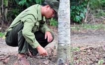 242 cây rừng bị đầu độc ở Đồng Nai
