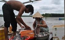 Hàng chục tấn cá nuôi lồng chết bất thường ở Bình Phước
