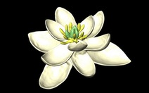 Bông hoa nào xuất hiện đầu tiêntrên Trái đất?