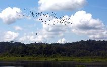 Kiến nghị dừng dự án, giải tỏa hạng mục lấn sông Đồng Nai