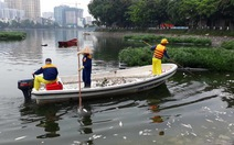 Cá lại chết trắng hồ Hoàng Cầu,Hà Nội