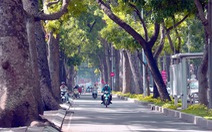 Tốn hơn 7 tỉ đồng xử lý cây xanh trên đường Tôn Đức Thắng