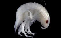 Vẫn còn nhiều sinh vật dưới biển sâu mà ta chưa biết