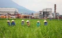 Tái cơ cấu ngành mía đường Việt Nam
