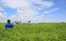 Trung Quốc: trồng cần sa hợp pháp và lợi nhuận cao