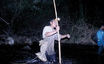 Săn rắn trong rừng cấm