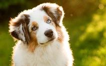 Được nghỉ phép để chăm sóc chó cưng