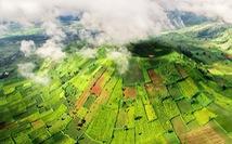 Lễ hội Hoa dã quỳ khai mạc trên núi lửa Chư Đăng Ya