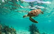 Khám phá bán đảo Yucatán với tàn tích Maya