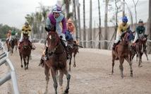 Trường đua ngựa 10.000 tỉ ở Hà Nội sẽ vận hành năm 2021