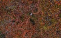 Lá đỏ rực rỡ Đà Lạt - Lang Bian khiến du khách ngẩn ngơ