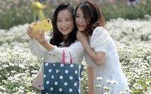 Mùa cúc họa mi nhộn nhịp từ vườn ra phố Hà Nội