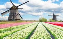 Tour xuân 5 nước: Lễ hội hoa xuân tulip Hà Lan