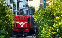 Hoa huỳnh liên rợp bóng đường ray xe lửa chiều Sài Gòn