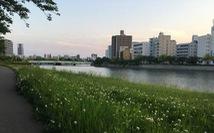 Đến Hiroshima, nơi ngân nga điệu hòa bình