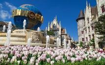 """Bắt trọn mùa hoa tulip đẹp """"rụng tim"""" ở Bà Nà Hills"""