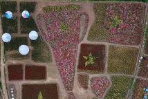Cup 'ngàn hoa' khổng lồ cổ vũ đội tuyển Việt Nam
