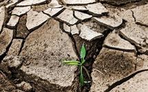 5 lĩnh vực cần hành động để đối phó với biến đổi khí hậu
