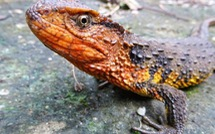 Phát hiện nhiều loài mới ở Việt Nam và vùng Mekong